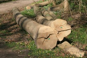 eikenhout-tafelblad-2